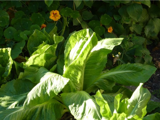 21 Vegetables that can grow in partial shade | Country Fair Garden ...