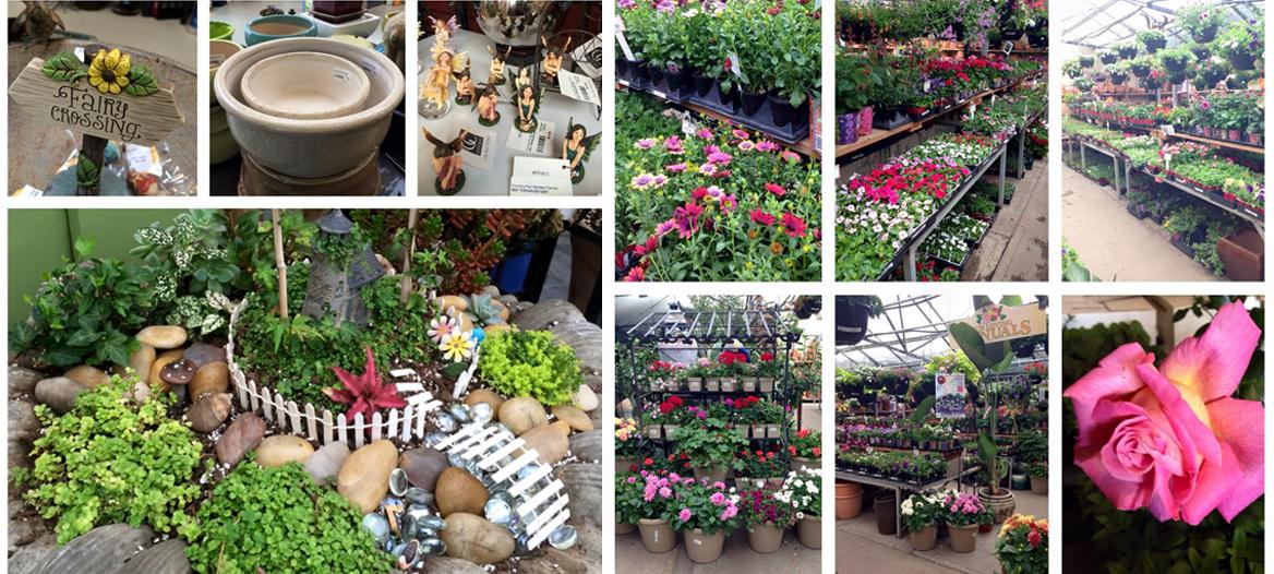 Denver Plant Nursery