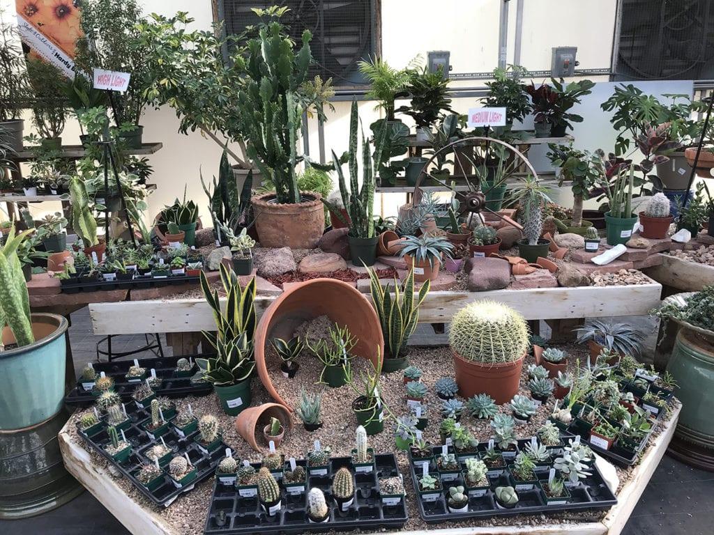 Cactus Plants for Sale in Denver, CO