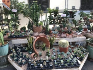 Cactus Plants for Sale in Denver, CO
