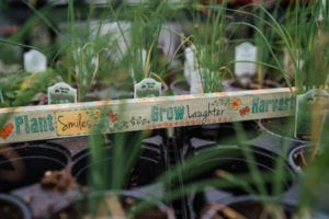 Herb Plants for Sale in Denver, Colorado
