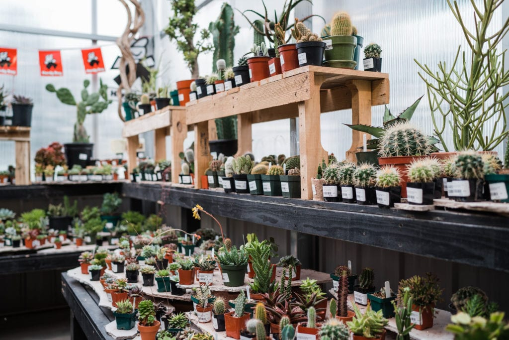 Cactus Plants for Sale in Denver, Colorado