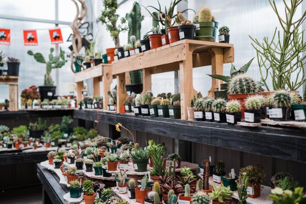 Cactus Plants for Sale in Denver, Colorado
