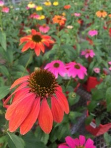 Denver, Colorado Fall Gardening Tips