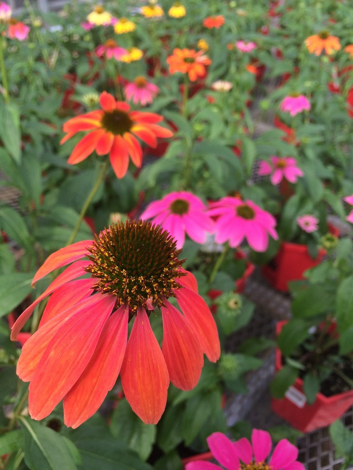 Denver Colorado Fall Gardening Tips