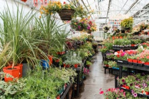 Shopping For House Plant Tips