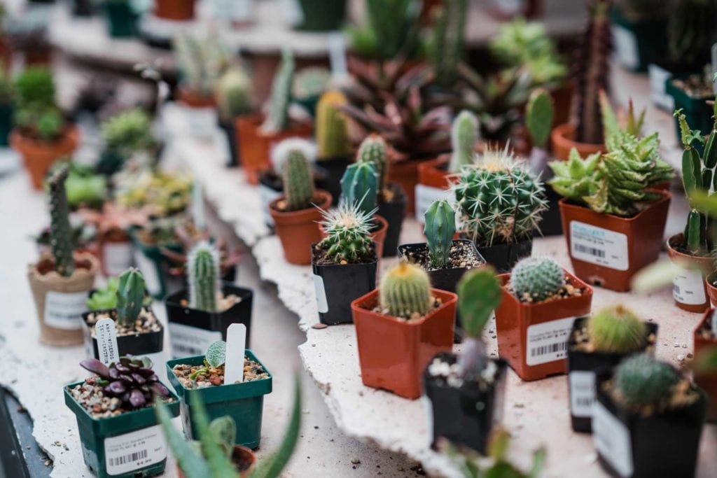 Amazing Selection Of Denver Co Succulent Plants