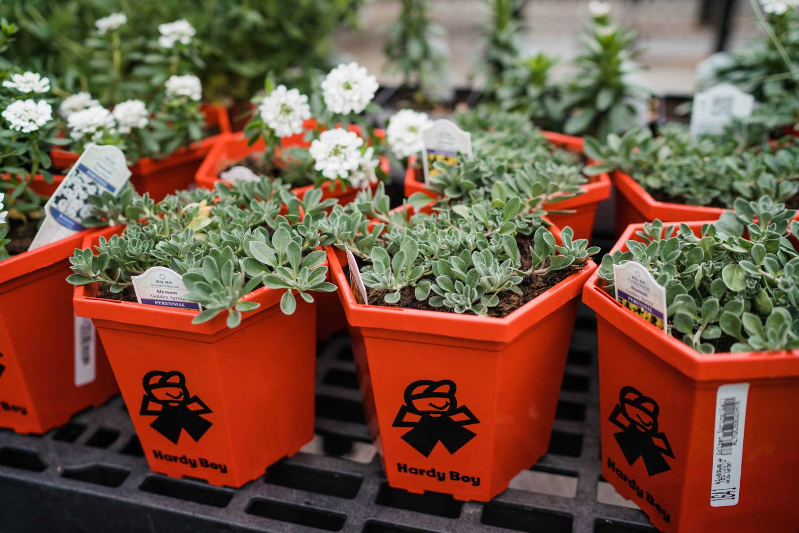 denver-co-annuals-perennials-for-sale
