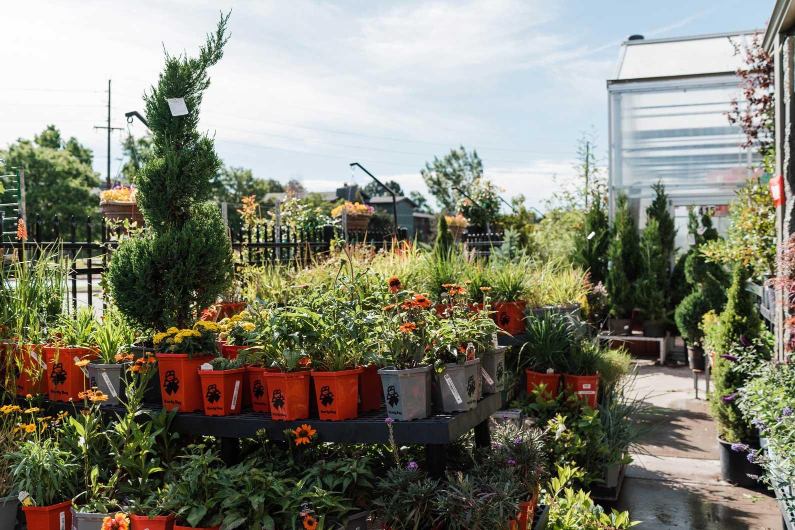 denver-colorado-shrubs