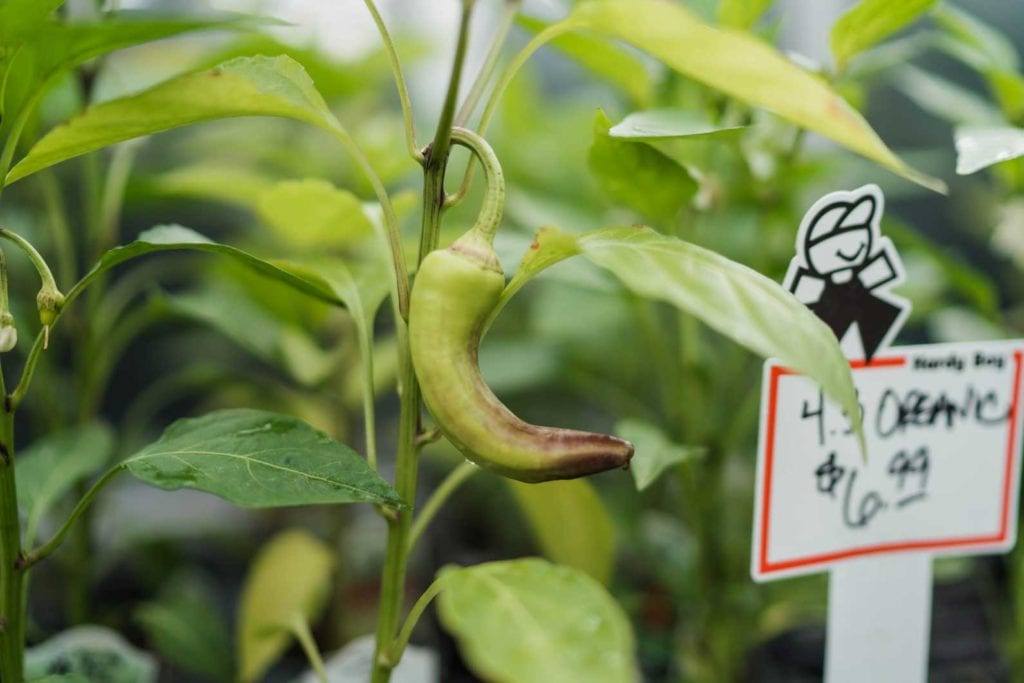 Denver, Colorado Vegetable Planting Guide